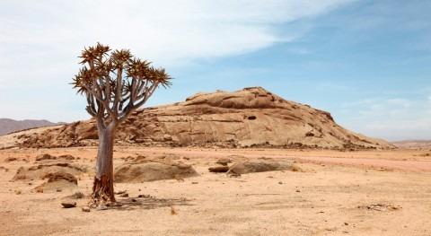 presidente Namibia declara estado emergencia causa sequía