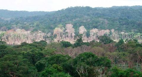 sequías podrían reducir capacidad absorción carbono Amazonia