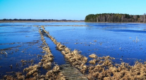 naturaleza, aliado más efectivo cambio climático