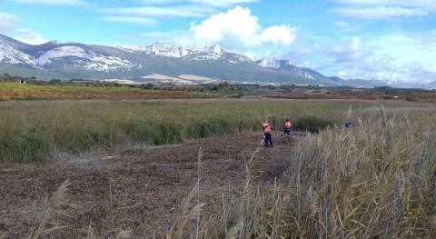 Restauración Laguna Navaridas que lecho sea más propicio anfibios y aves