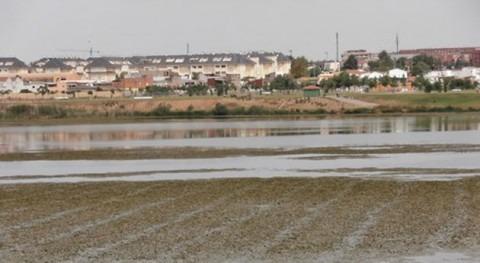 CHG emplea 2 herbicidas no tóxicos crecimiento nenúfar mexicano Badajoz