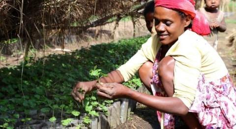 40.000 caficultores africanos aprenden combatir efectos cambio climático