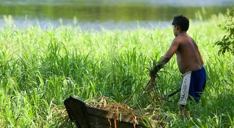 lucha cambio climático implica protección naturaleza
