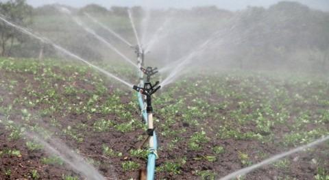 uso simultáneo agua y nitrógeno mejora sostenibilidad cultivos