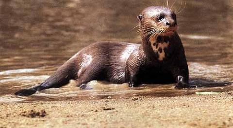SOS vida silvestre y humana Perú