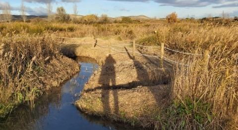 CHE ha continuado 2019 trabajos restauración tres humedales Zaragoza