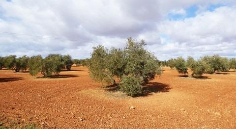 Castilla- Mancha tendrá propia ley minería tierras raras