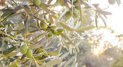 Desarrollan método que predice riego adecuado cultivos cuenca Guadalquivir