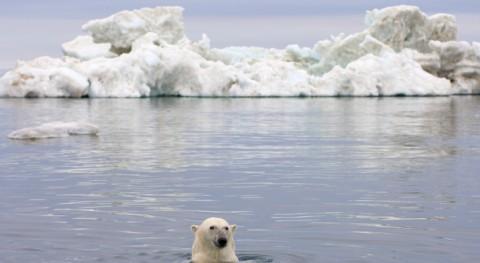 vida Ártico sufre otoño dramático