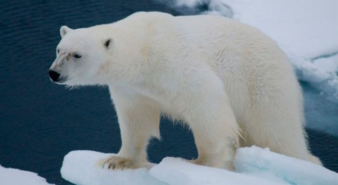 altas temperaturas provocan disminución hielo Ártico
