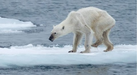 efectos cambio climático capturados sola fotografía