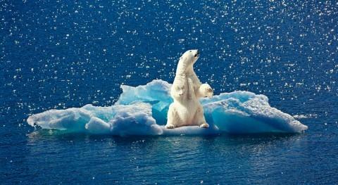 ¿Cómo afecta aumento pérdida hielo marino primavera al metabolismo oso polar?