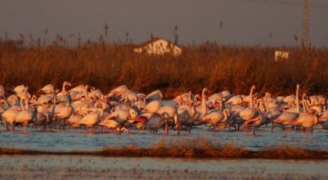 l'Albufera, crucial invernada aves acuáticas y conservación
