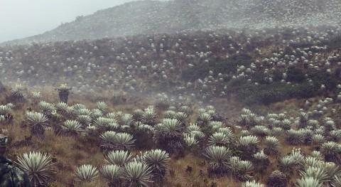 Páramos andinos y cambio climático: desafío enfrentar crisis hídrica región