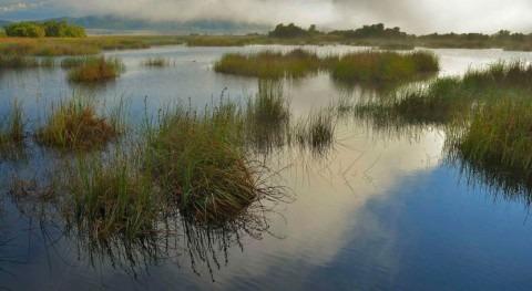 WWF, Daimiel, Doñana, Mar Menor y Arenales sufren robo agua 88.645 hectáreas