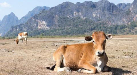 cambios fluctuaciones lluvia hacen cada vez más vulnerable al pastoreo global