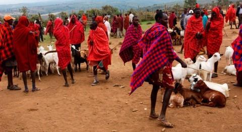 ¿Qué papel juegan pueblos indígenas lucha cambio climático?