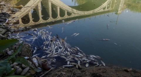 Aparecen miles peces muertos Cinca aguas abajo polígono Industrial Paules, Monzón