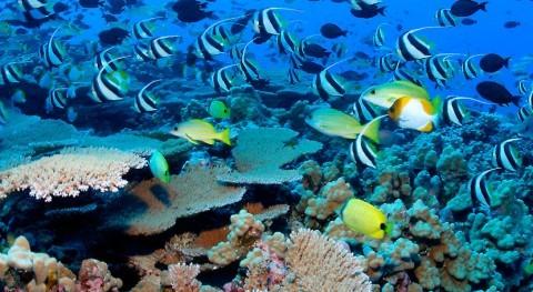 ¿Es posible integrar medioambiente y economía? ONU cuenta nueva herramienta probarlo