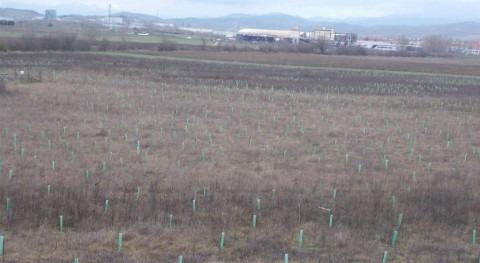 URA ha plantado 4.220 nuevos árboles y arbustos humedal Pedroko Agurain