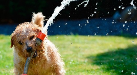 Gestión agua Versus Gobernanza agua