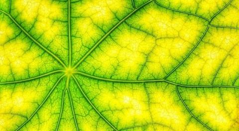 'truco' fotosintético conservar agua