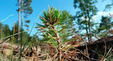 ¿Cómo medir capacidad bosque persistir?