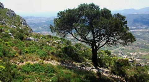 ¿Cuál es vulnerabilidad bosques ibéricos frente al calentamiento climático?