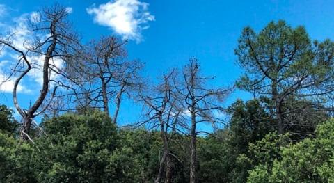 bosques españoles demuestran capacidad recuperación frente al aumento sequías