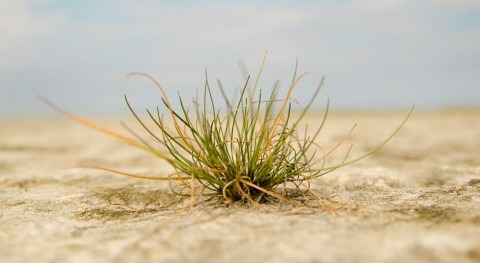 ¿Cómo perciben y reaccionan plantas sequía?