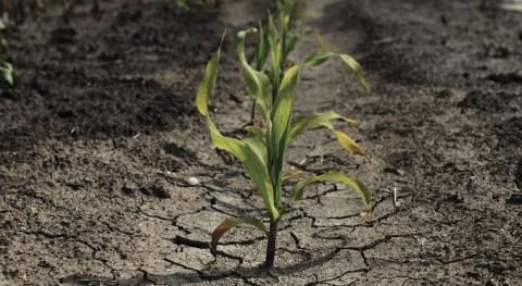 Identificado doble mecanismo que regula respuesta plantas sequía