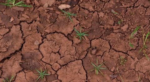 Descubierto regulador genético que permite rehidratación plantas después sequía