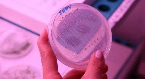 Hallada función proteína plantas desarrollar cultivos tolerantes sequías