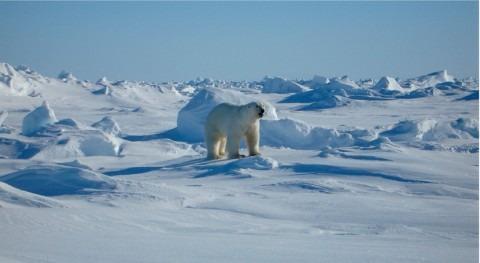 Confirmada presencia microplásticos nieve Alpes y Ártico