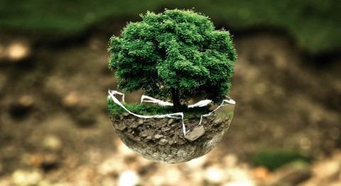 Política ambiental y ecologismo
