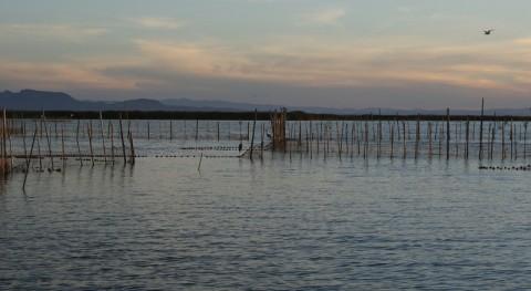 Metodología que reproduce calidad agua humedales artificiales como l´Albufera
