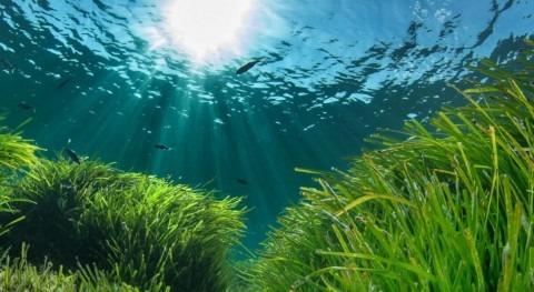 Posidonia Oceanica, reto Mar Mediterráneo