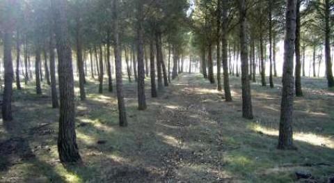 CHE adjudica proyecto prevención incendios montes provincia Lleida