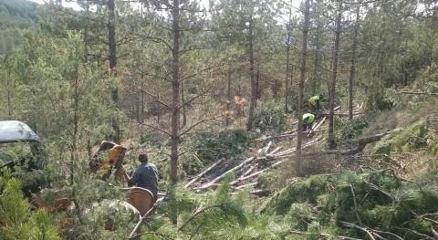 CHE inicia actuación prevención incendios forestales montes Huesca