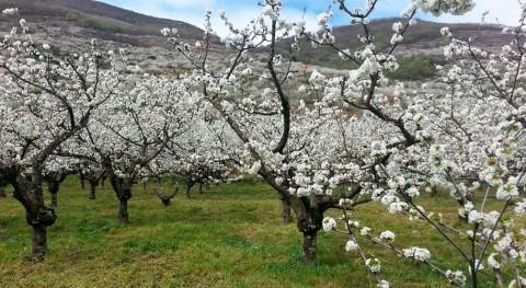 primavera 2017 España, más cálida 1965