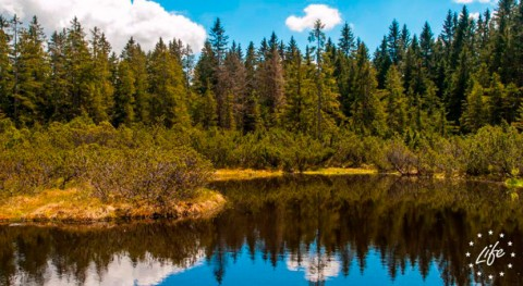 Programa LIFE otorga 64,7 millones euros proyectos españoles naturaleza y clima
