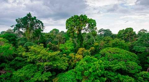 Perú, Noruega y Alemania se alían proteger Amazonía