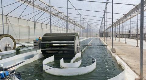 Depuradoras microalgas: ahorran energía, absorben CO2 y producen fertilizantes sostenibles