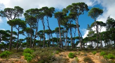 agua como producto forestal que mejora gestión bosques semiáridos