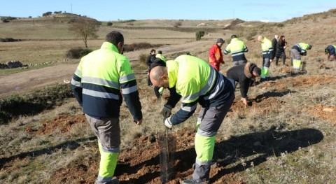 Zamora recuperará 10.000 m2 superficie forestal gracias plantación 800 árboles