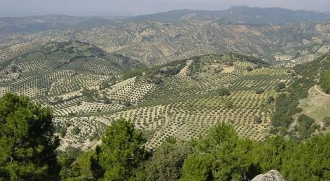 coste eléctrico regadío andaluz aumentará 37 millones euros anuales reforma tarifaria