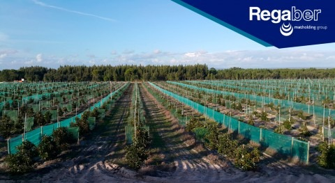 Solución integral riego y control climático cultivo aguacate