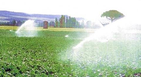Entra vigor Plan Especial Ordenación regadío zona norte Corona Forestal Doñana
