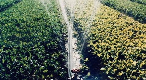 Plan Regadíos Corona Norte Doñana nace viciado, Feragua