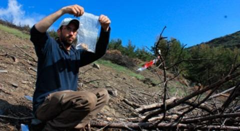 aridez provocada cambio climático ralentizará regeneración bosques quemados